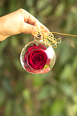 Esfera con rosa preservada