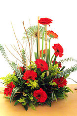 Gerberas Jungle