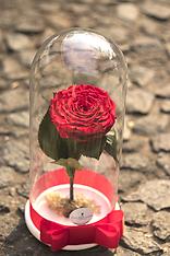 Rosa Preservada XXL en capsula